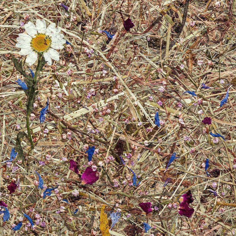 Настенное покрытие рельефное матовое природный декор WallFace AL-11005 ALPINE POTPOURRI Настенная панель необработанными альпийскими цветами и травами самоклеящаяся коричневая белая голубая розовая 4,026 м2